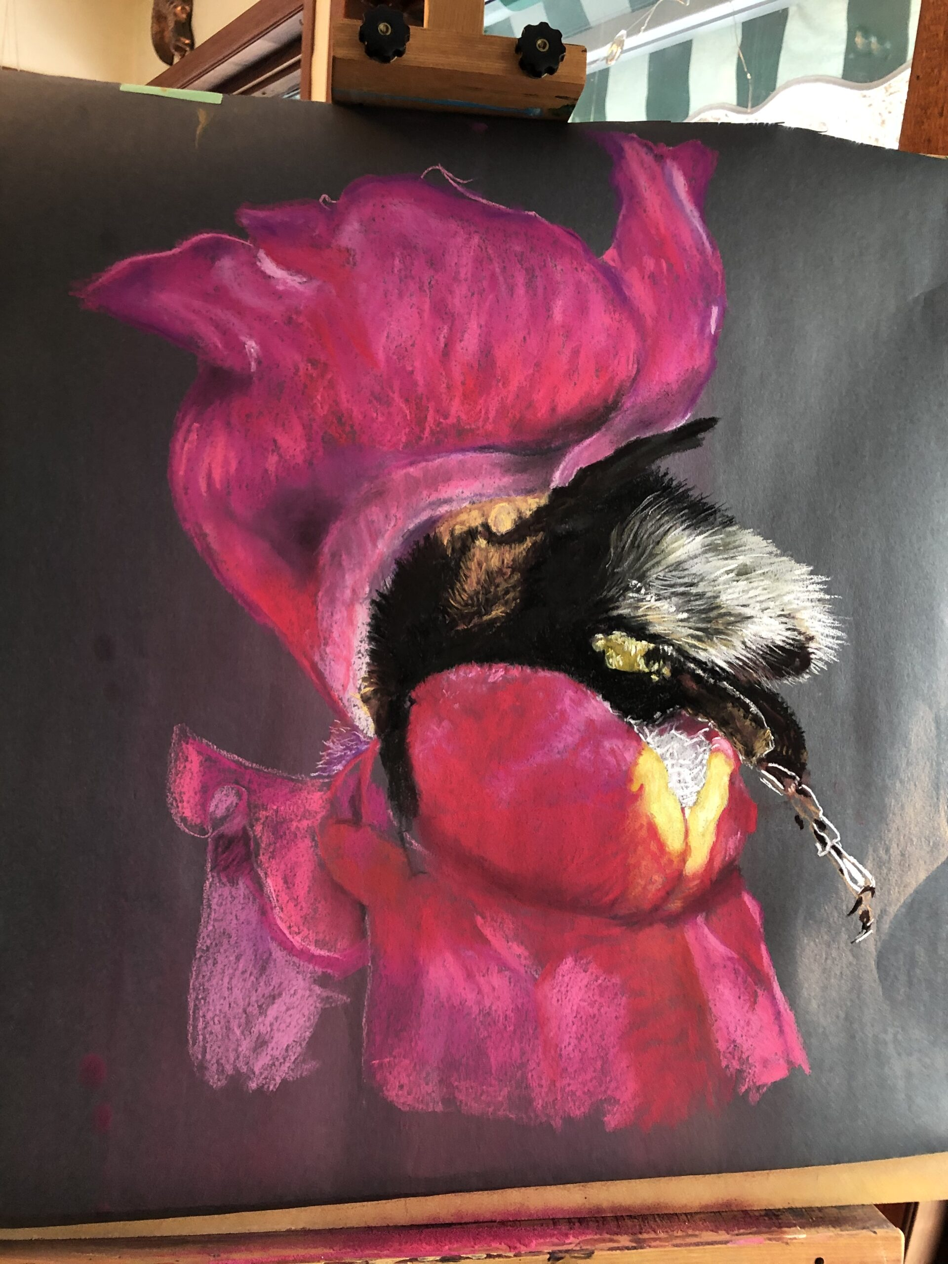 Sleepy bee in  Snap Dragon, chalk pastel on black paper